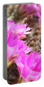 Sunlight On Pink Cactus Blooms Portable Battery Charger
