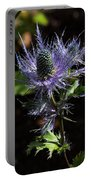Sunlit Bloom Of Alpine Sea Holly Portable Battery Charger