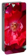 Sunlit Blooms Of Dortmund Hybrid Scots Briar Rose Portable Battery Charger