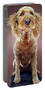 Super Pets Series 1 - Super Misiu Portable Battery Charger