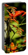 Swallowtail Hanging On The Crocosmia Portable Battery Charger