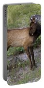 Sweet Elk Calf Portable Battery Charger