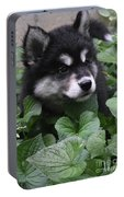 Sweet Markings On The Face Of An Alusky Puppy Dog Portable Battery Charger
