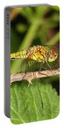 Sympetrum Sanguineum Portable Battery Charger