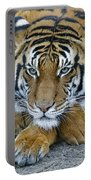 Takin A Break Tiger Portable Battery Charger