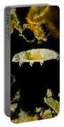 Tardigrade, Or Water Bear, Lm Portable Battery Charger