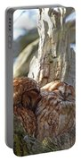 Tawny Owls In Love Portable Battery Charger