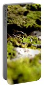 Tennesee Moss Portable Battery Charger