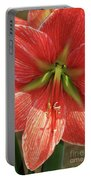 Terra Cotta Amaryllis Portable Battery Charger