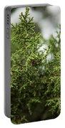 Texas Cedar Tree Portable Battery Charger