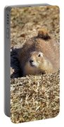 The Amazing Black-tailed Prairie Dog Portable Battery Charger