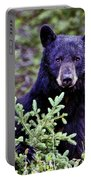 The Black Bear Stare Portable Battery Charger