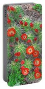 The First Week Of May, Claret Cup Cacti Begin To Bloom Throughout The Colorado Rockies.  Portable Battery Charger