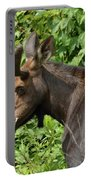 The Hungry Moose Portable Battery Charger