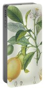 The Lemon Tree Portable Battery Charger