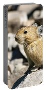 The Pika Portable Battery Charger