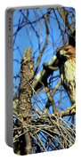 The Search Red Tail Hawk Art Portable Battery Charger