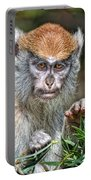 The Stare A Baby Patas Monkey  Portable Battery Charger