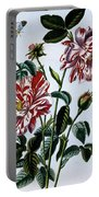 The Variegated Rose Of England Portable Battery Charger