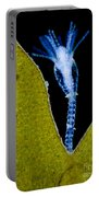 Thecate Hydrozoan Clytia Sp., Lm Portable Battery Charger