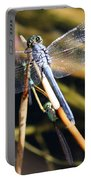 Three Dragonflies On One Reed Portable Battery Charger