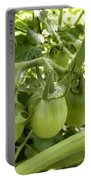 Three In A Row Green Tomatoes Portable Battery Charger