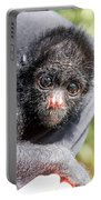 Three Month Old Spider Monkey Portable Battery Charger