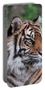Sumatran Tigress Portrait  Portable Battery Charger