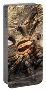 Tiger Spider  Portable Battery Charger