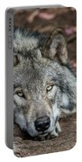 Timber Wolf Picture - Tw286 Portable Battery Charger
