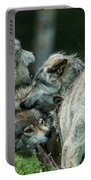Timber Wolf Picture - Tw70 Portable Battery Charger