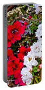 Burgundy Queen Bush At Pilgrim Place In Claremont-california Portable Battery Charger