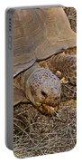 Tortoise Eating Lunch In Living Desert Zoo And Gardens In Palm Desert-california  Portable Battery Charger