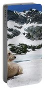 Traildog In Snow At Missouri Lakes Portable Battery Charger