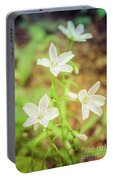 Tranquil Carolina Spring Beauty Portable Battery Charger