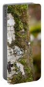 Tree Bark Graffiti - H 04 Portable Battery Charger