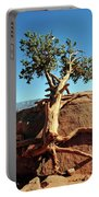 Tree Verses Rock Portable Battery Charger
