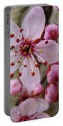 Trees Art Prints Canvas Pink Blossoms Spring Blue Sky Baslee Troutman Portable Battery Charger