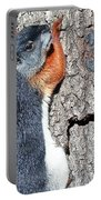Tricolored Squirrel Portable Battery Charger