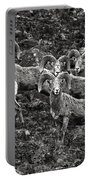 Trophy Rams Portable Battery Charger