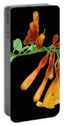 Trumpet Vine, X-ray Portable Battery Charger