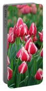 Tulips - Candy Apple Delight 02 Portable Battery Charger