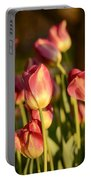 Tulips In Public Garden Portable Battery Charger