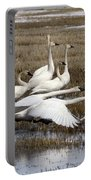 Tundra Swans Alberta Canada 3 Portable Battery Charger