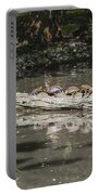 Turtles Sunning On A Log Portable Battery Charger