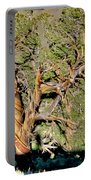 Twisted Bristlecone Portable Battery Charger