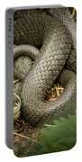 Two Intertwined Grass Snakes Lying In The Sun Portable Battery Charger