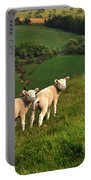 Two Welsh Lambs Portable Battery Charger