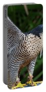 Upset Peregrine Portable Battery Charger