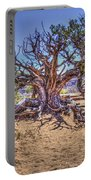 Utah Juniper On The Climb To Delicate Arch Arches National Park Portable Battery Charger